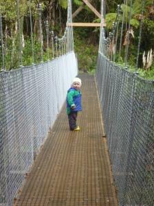 Bridge on track to Waitawheta Hut